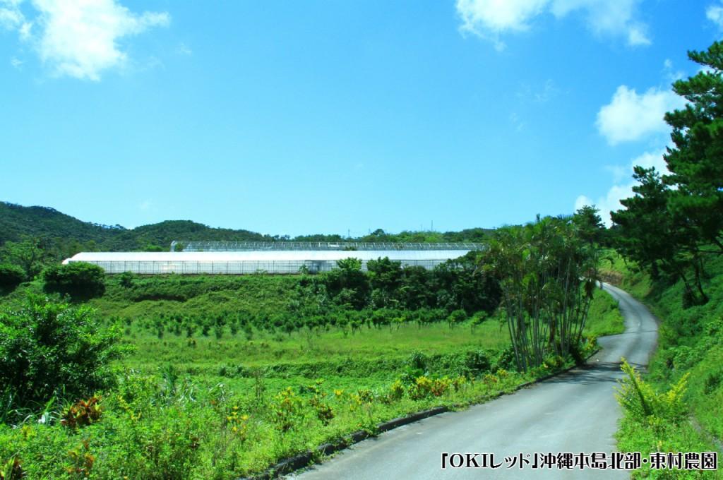 東村の農園3_1280×850 -ロゴ