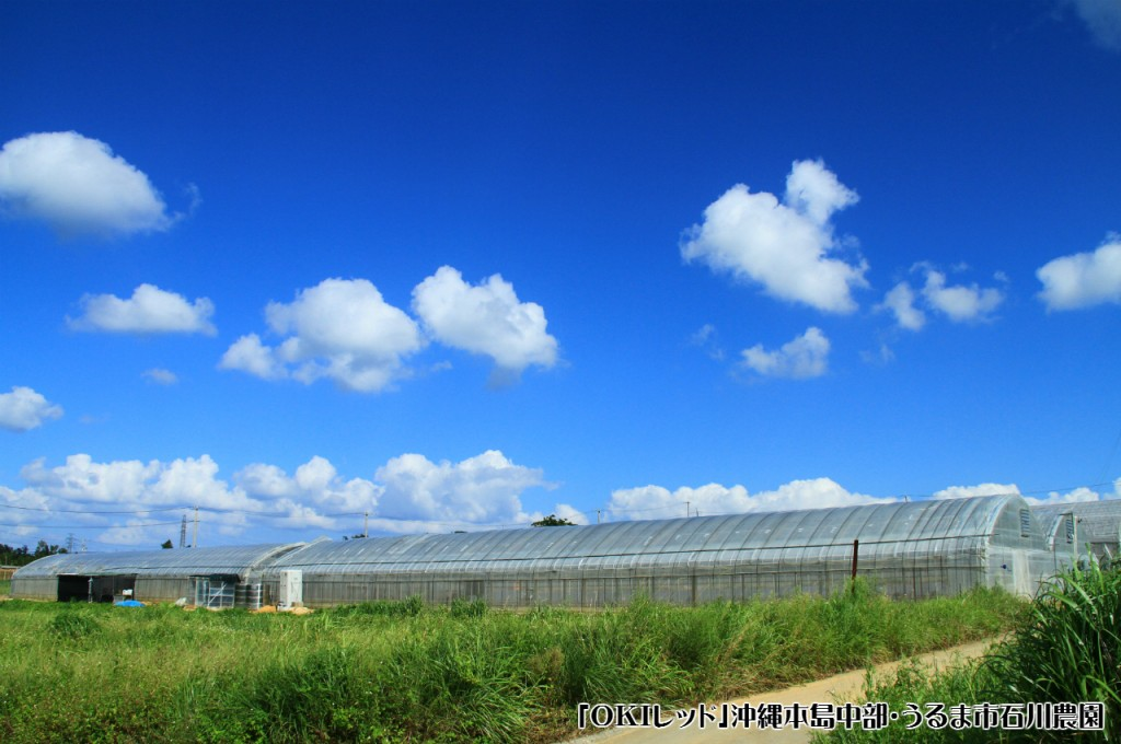 石川農園_1280×850-ロゴ